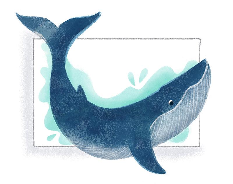 ninotchka.nl-walvis op schaal